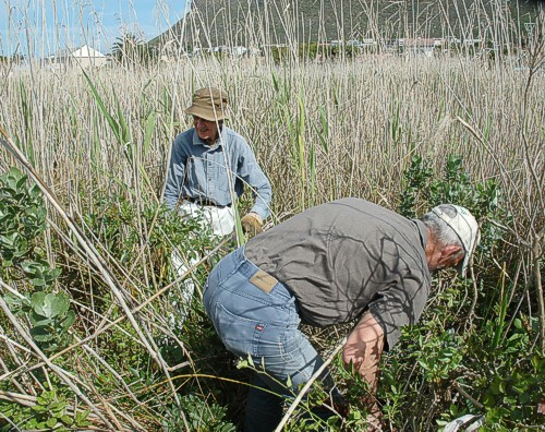 Robin and Bert cutting back some regrowth of Pepper trees we did not do properly earlier in the year.