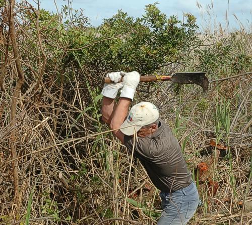 Bert cutting down Pepper trees.