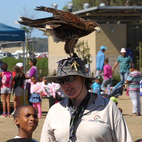 cbc-strandfontein-birdathon-2015-03-march-2015