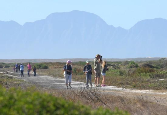 cbc-strandfontein-birdathon-2015-110-march-2015