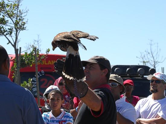 cbc-strandfontein-birdathon-2015-138-march-2015