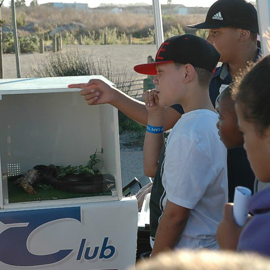 cbc-strandfontein-birdathon-2015-23-march-2015