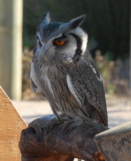 cbc-strandfontein-birdathon-2015-58-march-2015
