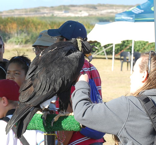 cbc-strandfontein-birdathon-2015-62-march-2015