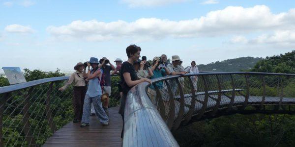 Kirstenbosch Bird Walk – 18 January 2017 by Felicity Ellmore.