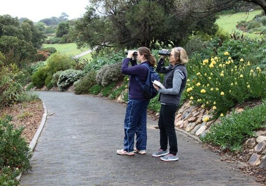 Cheryl Faull and Eileen Chapman. Kirstenbosch Photograph by Graham Pringle