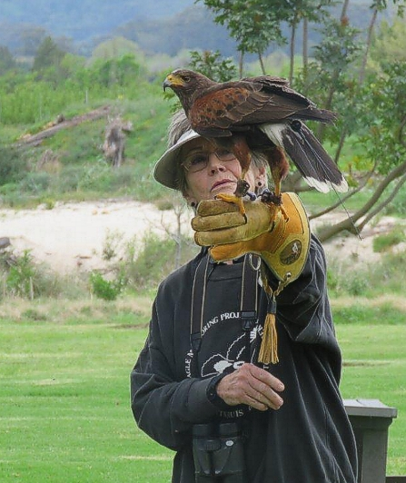 Jill Mortimer with the Harris Hawk. Photograph by Priscilla Beeton