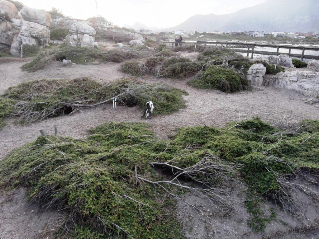 Stony Point breeding sites