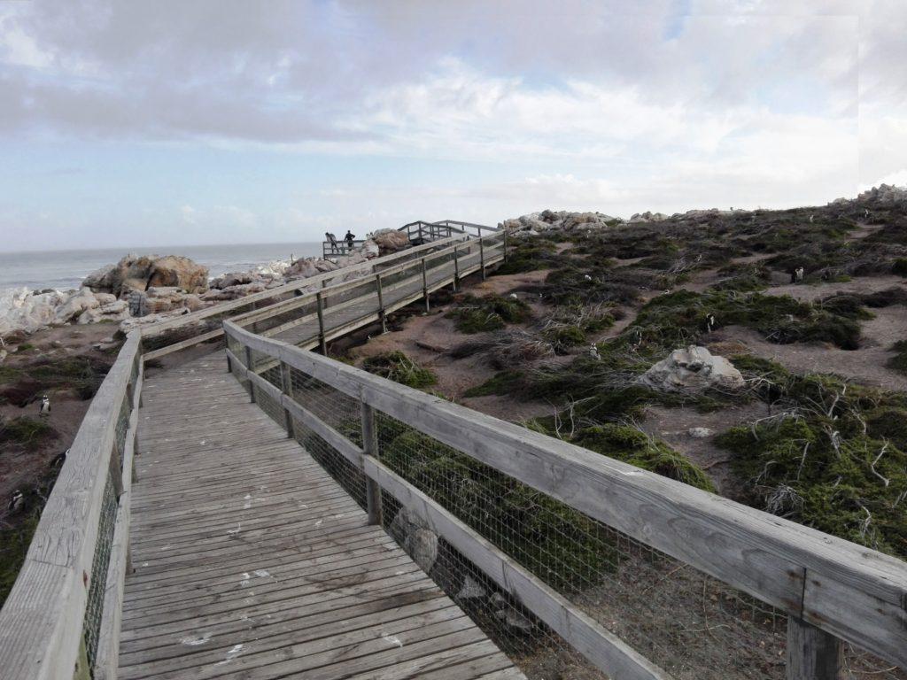 Stony Point Boardwalk through colony
