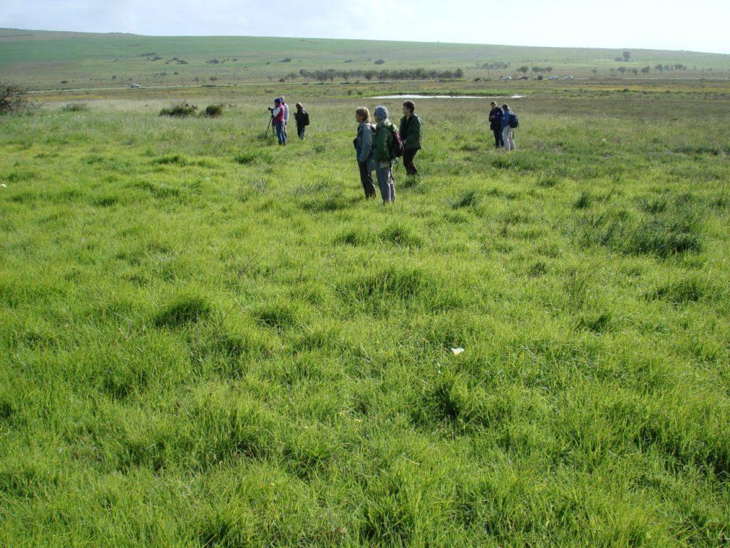 Tienie Versveld rank grasslands