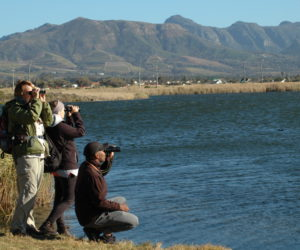 cbc bird counting at zandvlei gavin lawson april 2017