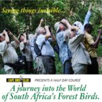 Forest Birds Flyer Website