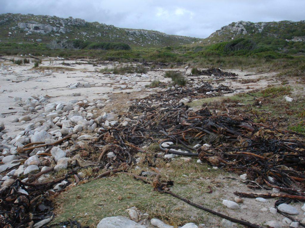 Olifantsbos beach - Mel Tripp