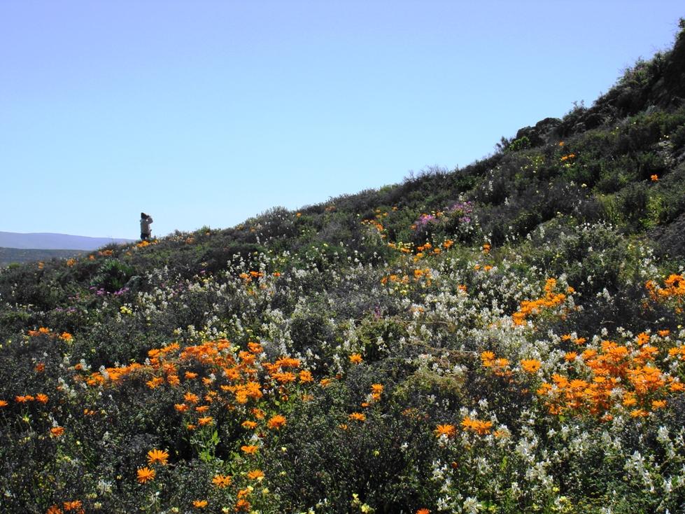 Spring flowers on Eierkop - Mel Tripp