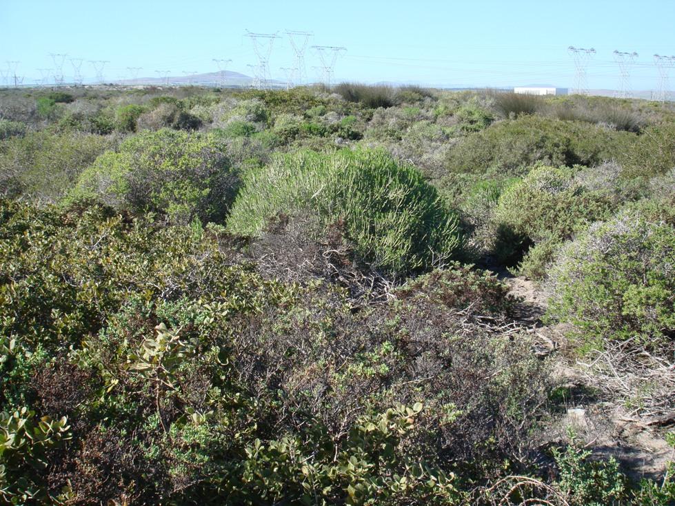 Coastal scrub on the Grysbok trail