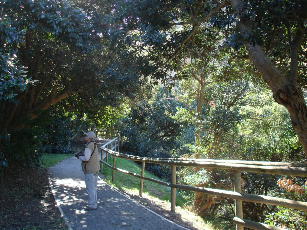 Harold Porter Indigenous Forest - Mel Tripp