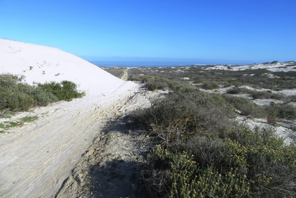 Mountain bike trail over dunes