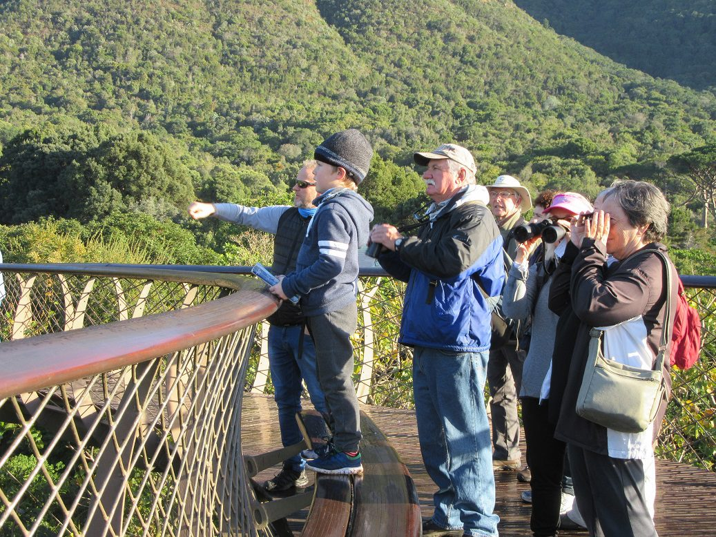 On the Boomslang. Photograph by Felicity Ellmore