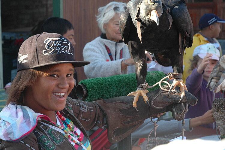 cbc birdathon edwina with eagle may 2013