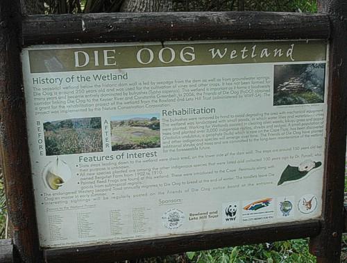 Bird Ringing at Die Oog.