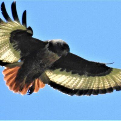 Outing to Sunbird Centre, Noordhoek – 18 October 2017