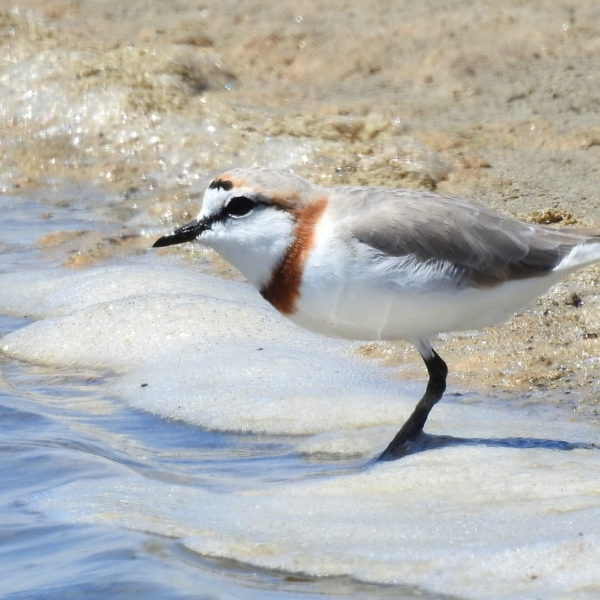 Lower Berg River Estuary Outing – Sunday 19 November 2017