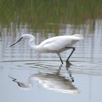 Zandvlei Nature Reserve – 21 January 2018
