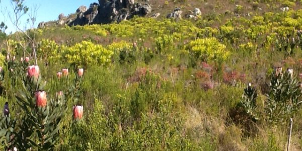 Endemism in the Fynbos Half-Day Course