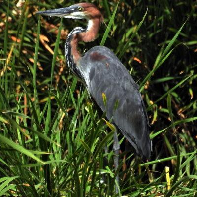 Paarl Bird Sanctuary Counts in 2018.