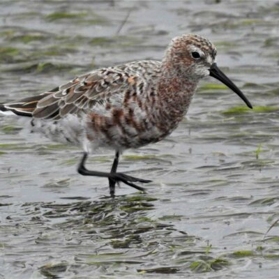 Farewell to the Waders – 25 March 2018
