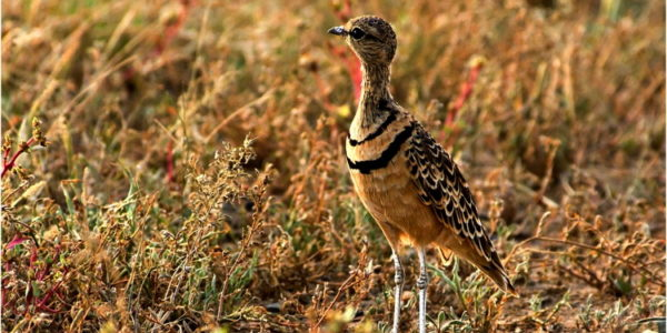 Birding trip to the Northern Cape with Kevin Drummond-Hay in July 2018.