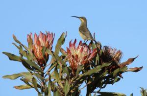 Malachite Sunbird Photograph by Andrew Mayes