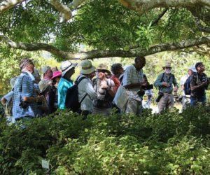Kirstenbosch Bird Walk