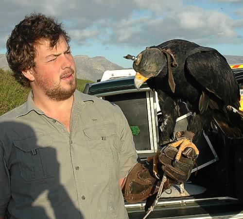 Birdathon 2013, Strandfontein, Southern Birding Area, False Bay Nature Reserve, Eagle Encounters