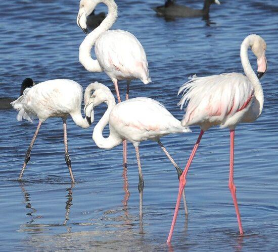 cbc-strandfontein-birdathon-148-may-2013