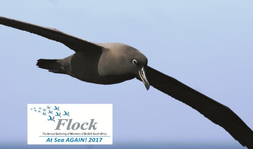 Flock Seabird Course