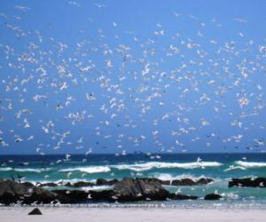 Terns coastal
