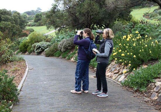 Cheryl Faull and Eileen Chapman. Kirstenbosch Photograph by Graham Pringle
