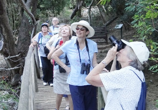 Spotting the owl in the tree above our heads. Kirstenbosch. Photograph by Otto Schmidt