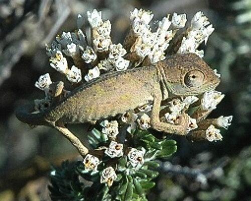 zvt-chameleons 3 july 2008