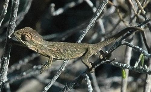 zvt-chameleons 5 july 2008