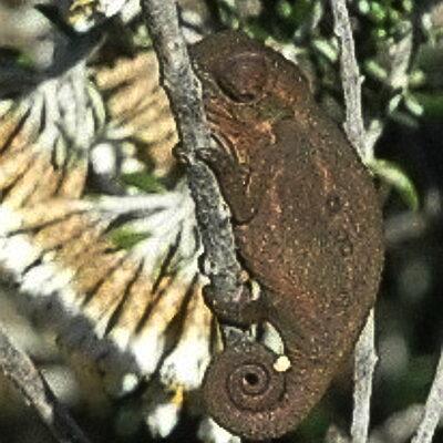 zvt-chameleons 6 july 2008