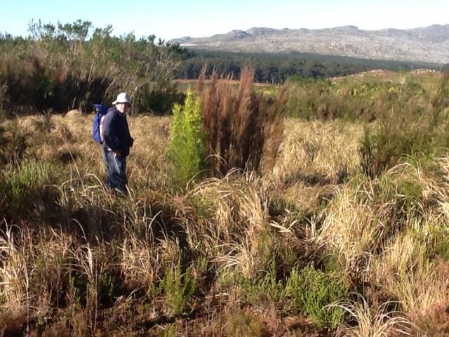 Striped Flufftail habitat - Mel Tripp