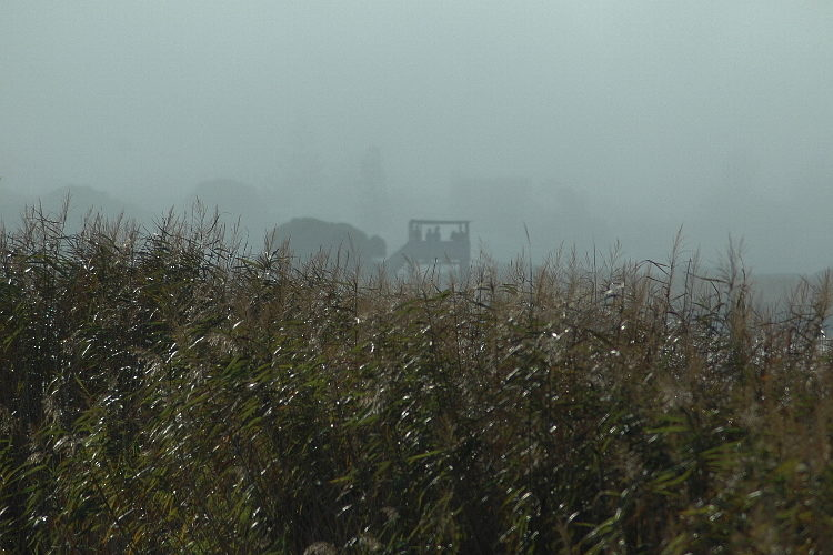 zandvlei upper 02 counters in the hide disappearing in the fog 21 april 2018