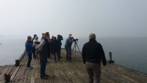 Birding in the mist Photograph by Karin Wilson