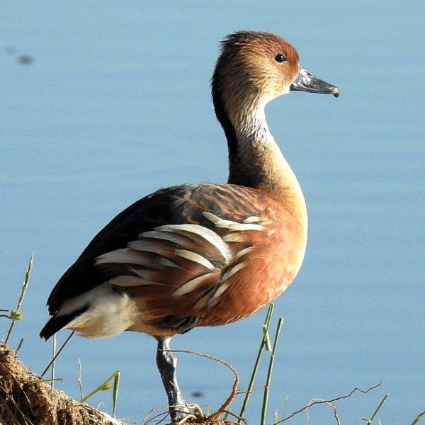 Paarl Bird Sanctuary Counts in 2019.