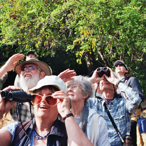 The birders craning their necks to get a good view of an African Goshawk