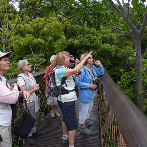 cbc kirstenbosch walk 01 GC dec 2018