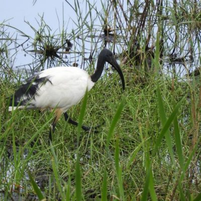 Outing to Clovelly Wetland. 13th February 2019