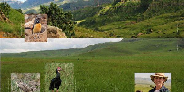 Birds of the Mountains and Grasslands